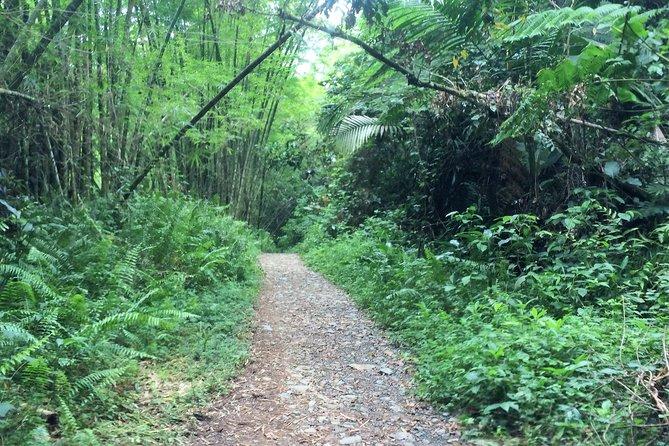 El Yunque Rainforest Off the Beaten Path