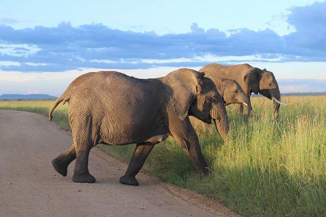 6-Day Best of Tanzania Budget Safari from Arusha