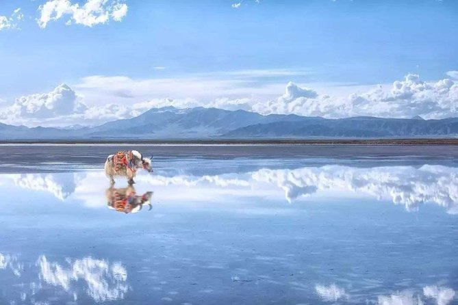 Private Transfer Service to Qinghai Lake and Chaka Salt Lake from Xining