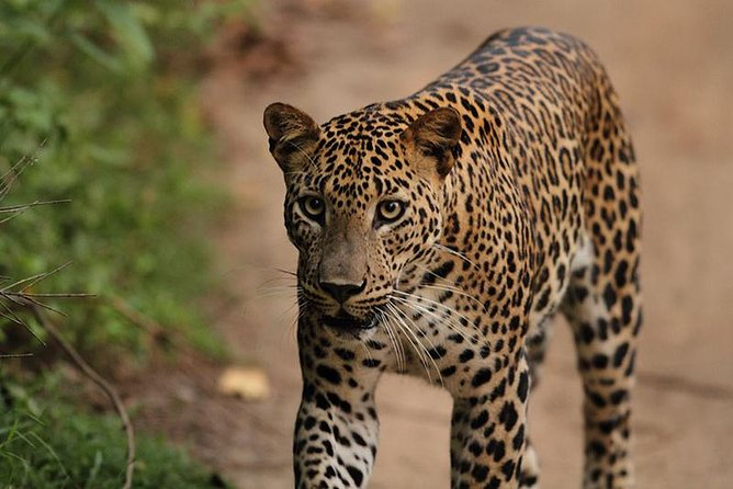 Yala National Park Afternoon Safari Game Drive