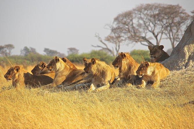 "Nairobi National Park ""SUNRISE"" Drive & Elephant Orphanage"