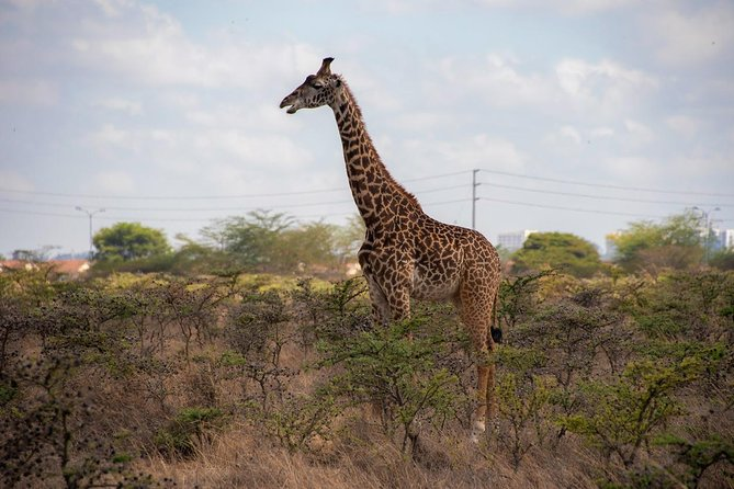 Nairobi All Day Attraction Sites
