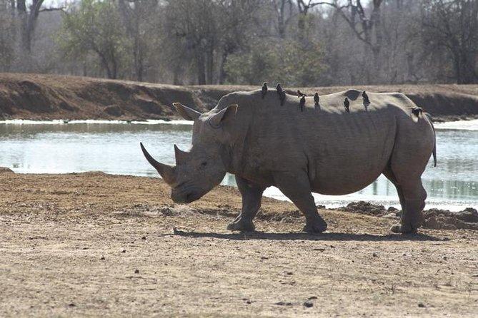 Full-Day Hlane Royal National Park Safari from Manzini