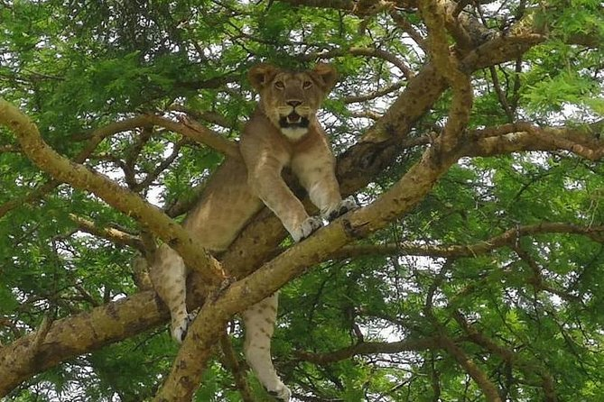 7 days Wildlife Safari in Uganda