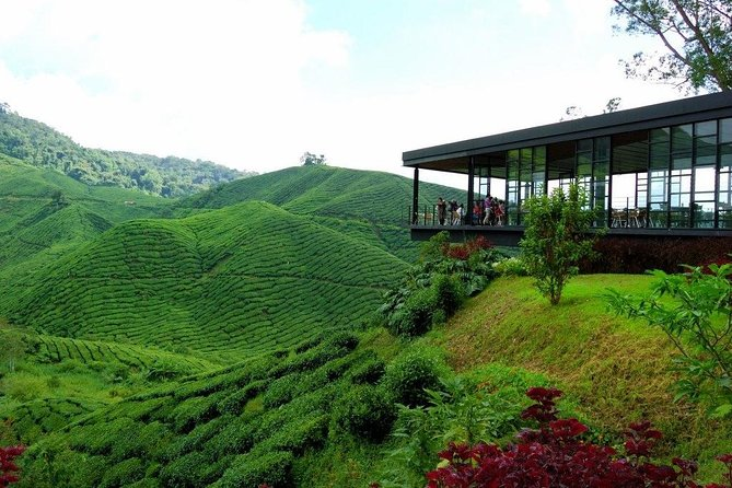 Cameron Highlands Full-Day Nature Tour