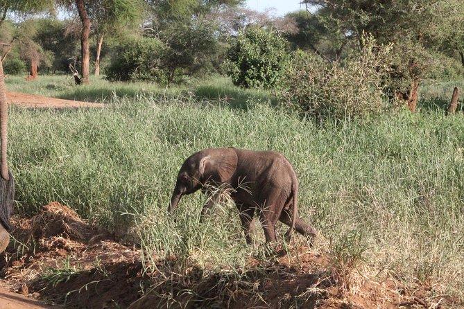 6 Pax Per 6 Days, Tanzaniasafaris