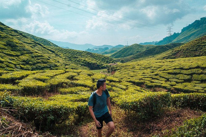 Full-Day Cameron Highlands Nature Tour (Private) photo 12