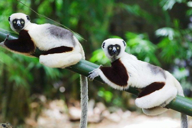 tour of Madagascar: east coast: ANDASIBE, SAINTE MARIE, MAHAMBO, PANGALANES