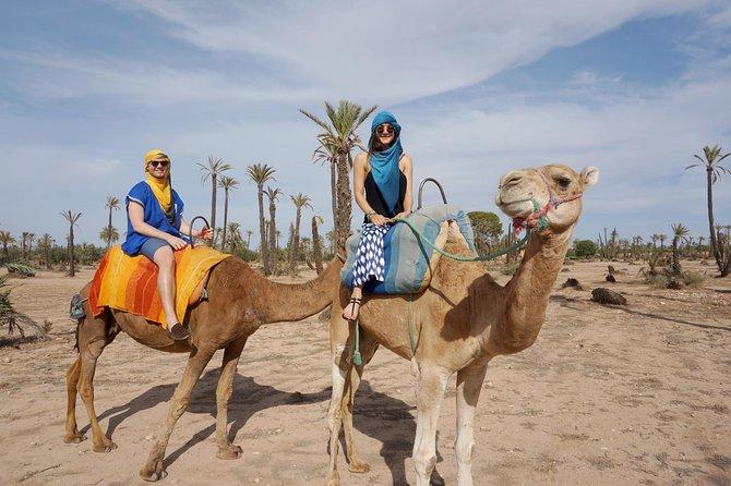 Agadir Camel Ride 02 hours