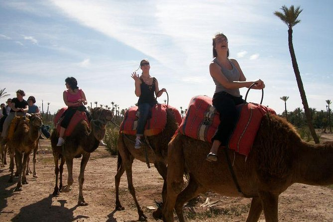 Agadir Camel Tour Ride 02 Hours photo 8