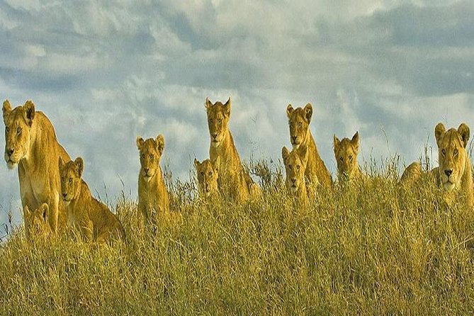 5 Days Excellent Wildlife Safari in Serengeti and Ngorongoro Crater, Tanzania