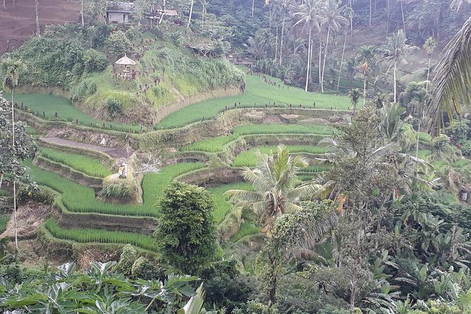 Bali: Hidden Canyon, Waterfall & Temple
