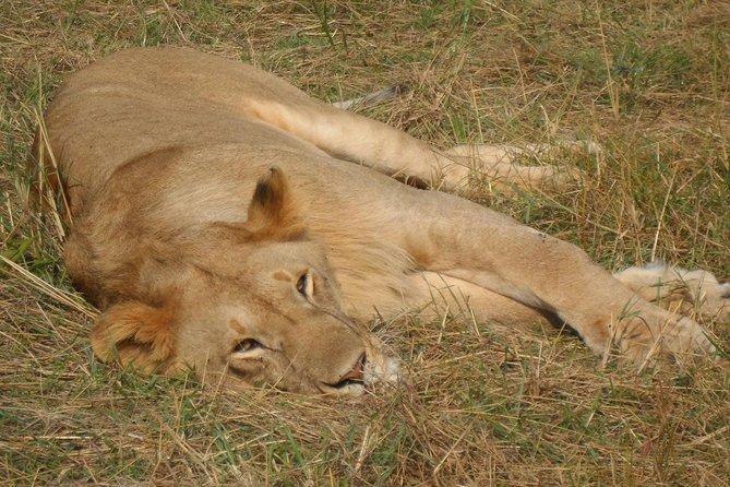 7.a.m Pick Up Nairobi National Game Drive/giraffe Centre/lunch At Carnivore
