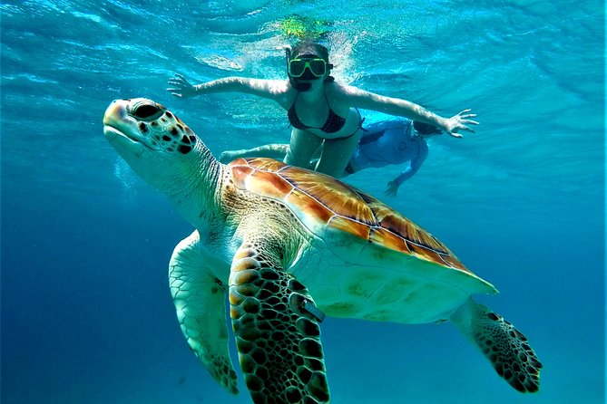 West Coast Catamaran Trip - Visit the Blue Room & Snorkel with Turtles 2020  - Curacao