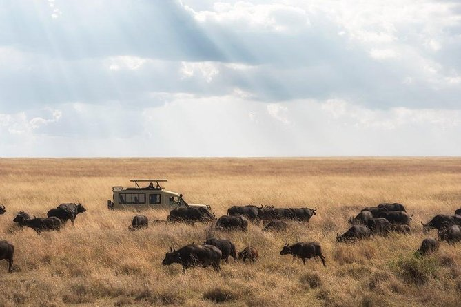 4 Days Tanzania Family Luxury Safari photo 1