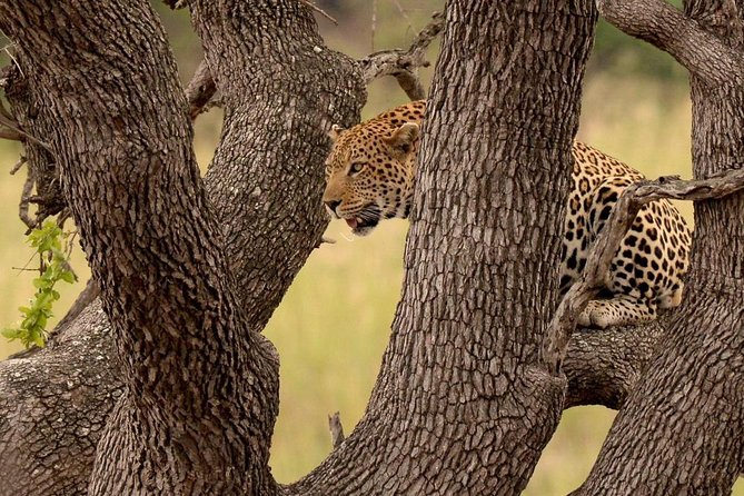 Kruger National Park 2 Days 1 Night Magical Safari from Johannesburg photo 13