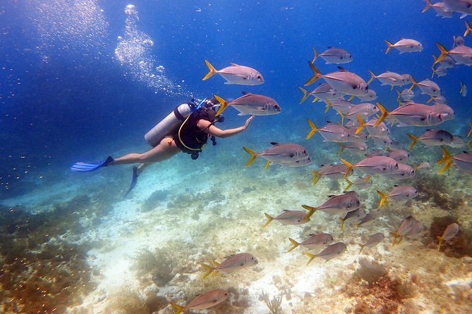 Diving in the Mexican Caribbean for Beginners | 2 Tanks 2 Dives | All Inclusive