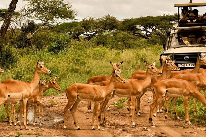 3 Day Serengeti and Ngorongoro Crater Tour photo 6