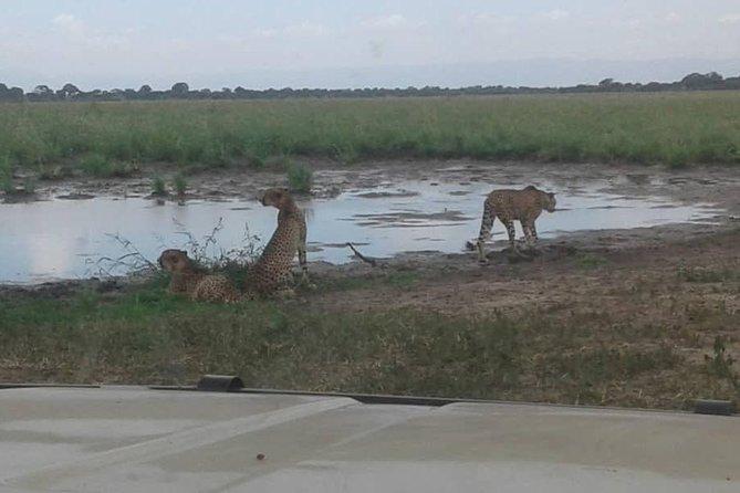 Tanzania Safaris | 3 DAYS SAFARI - L.Manyara NP,Tarangire NP& Ngorongoro Crater.