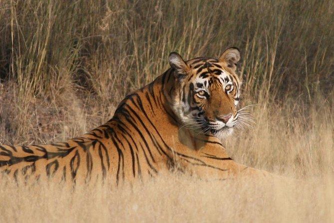 Delhi, Agra,Jaipur(Golden Triangle ) Tour With Ranthambore- (8 Days )