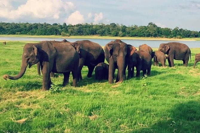 Yala, Udawalawe safari tours