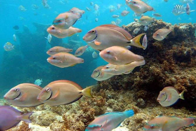 Punta Cana Seaquarium
