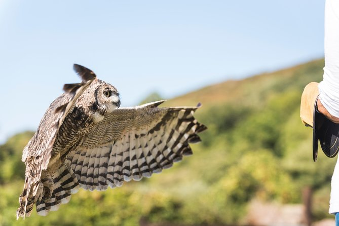 Fly Back to Nature with Owls