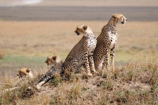 Serengeti Experiences photo 1