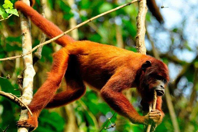 2 days 1 night – Peruvian Tambopata Jungle