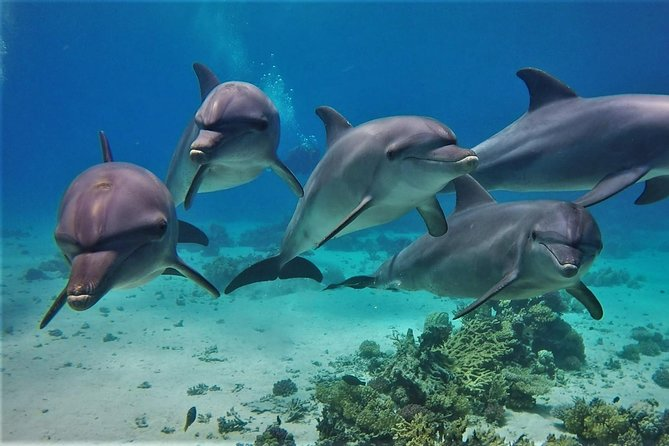 Special Dolphin House VIP snorkeling Sea Trip - Hurghada photo 1