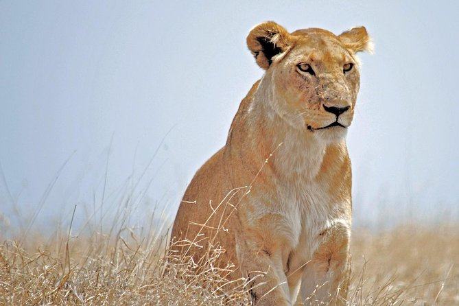 10-Day Kenya & Tanzania Wildlife Safari- Mid Luxury
