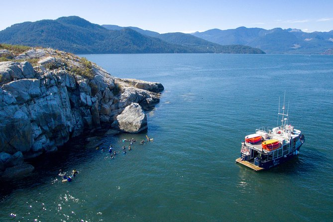 Snorkel and Kayak Near Seals: Vancouver Eco-Adventure photo 4