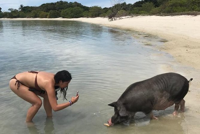Pig Island Koh Samui by Speedboat with Sunset (Exclusive Pig Feeding Experience) photo 28