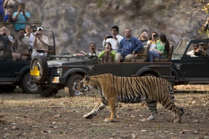 Private Day Tour to Ranthambore National Park from Jaipur - All Inclusive
