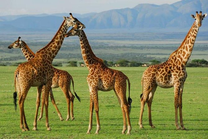 3 Days Safari - Tarangire National Park