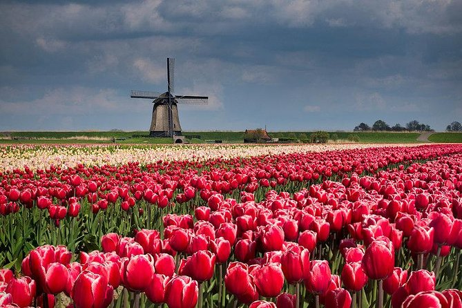 Zaanse Schans Windmills-Volendam-Giethoorn Private Tour Private Guide 1 day