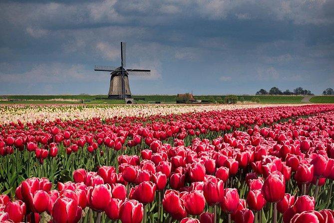 Zaanse Schans Windmills-Volendam-Giethoorn Private Tour Private Guide 1 day