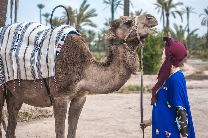 Agadir Camel Tour Ride 02 Hours photo 5