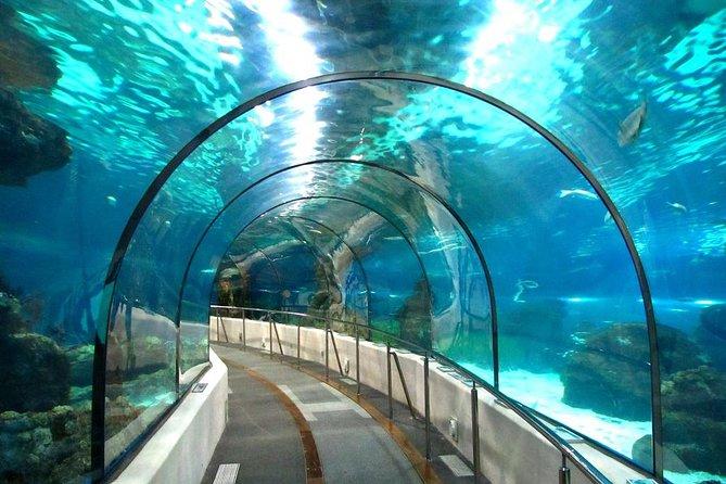 Grand Aquarium – Hurghada
