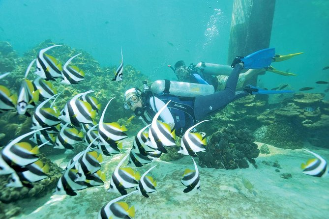 Magnificent Langkawi Corals at Pulau Payar (Scuba/Beginner Dive)