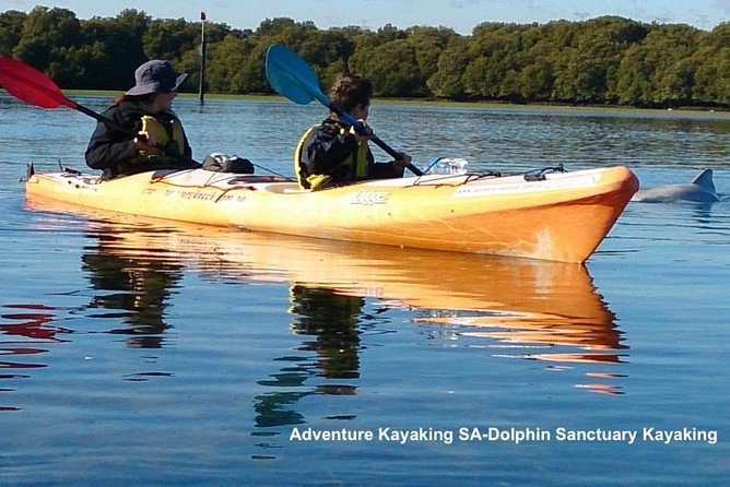 Adelaide Dolphin Sanctuary and Ships Graveyard Kayak Tour