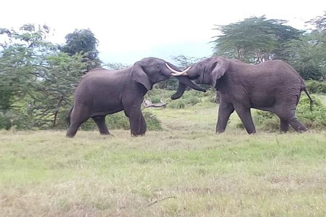 Tanzania Safaris | 5 DAYS SAFARI - Serengeti NP,Ngorongoro,L.Manyara/Tarangire