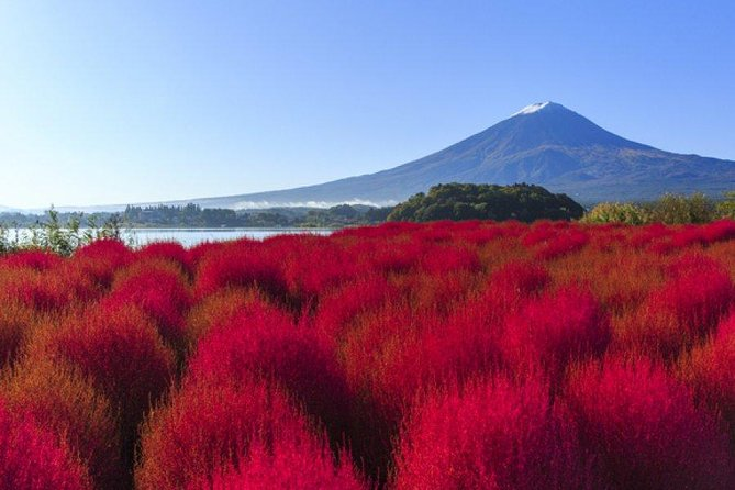 Mt. Fuji 5th Station, Lake Kawaguchi & Seasonal Fruits Picking from Tokyo photo 2