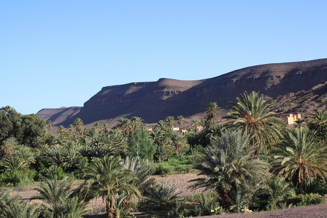 Ouarzazate Tour in Fint Oasis with Dinner