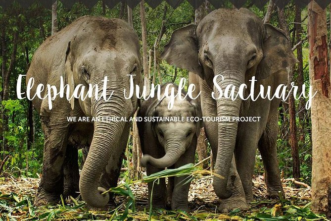 Chiang Mai : Elephant Jungle Sanctuary with round trip transfer photo 1