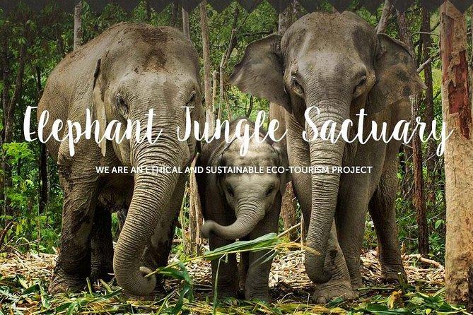 Pattaya : Elephant Jungle Sanctuary with round trip transfer