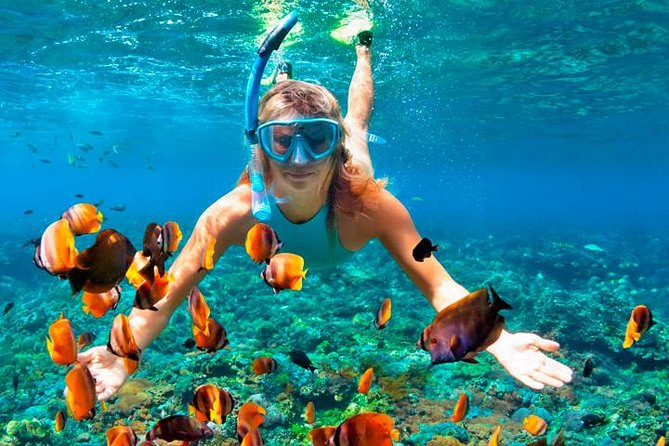 Full Package 3 in 1 (Swim, Ride & Fly) Includes Transportation in Cancun