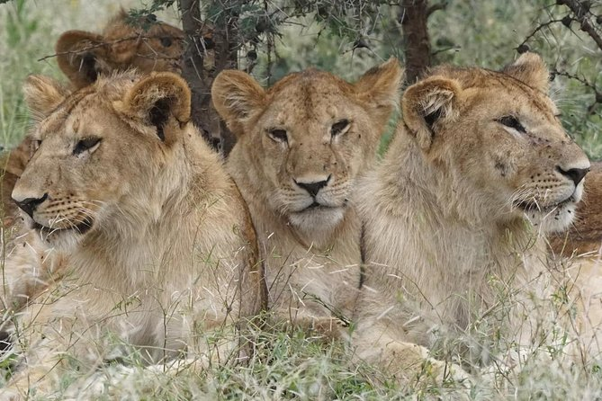 5 Days 4 Nights African Lions Safari