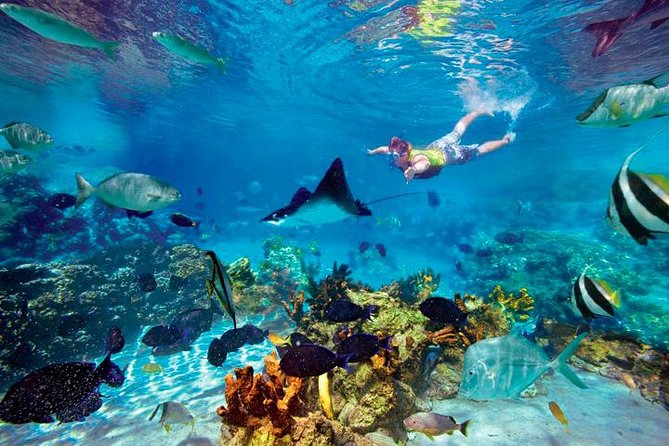Explore and Enjoy the Caribbean Sea in Cancun (Swim and Ride) photo 3