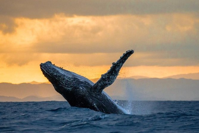 Whale Tours with Locals from Samana